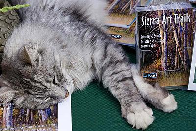 SAT Cat Photo