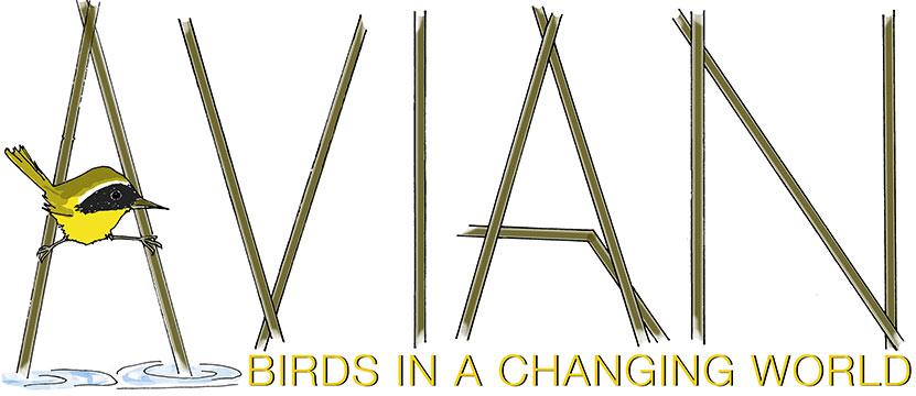 Avian Logo Image