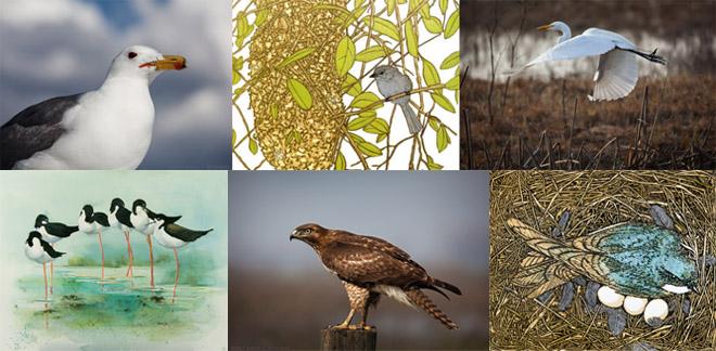 Bird Combo Image